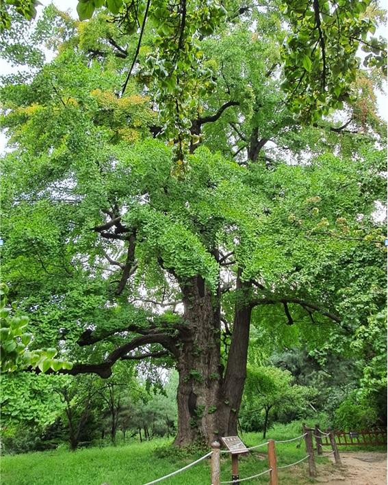 600년 조선왕릉 숲 이야기